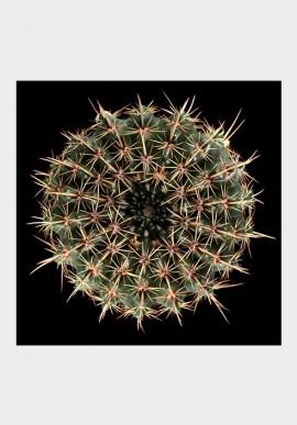 Cactus, 50x50, Fabio Zonta